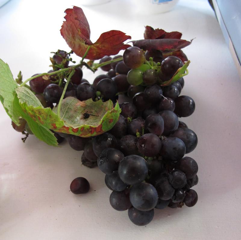raisin bio et écolo