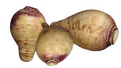 vieux légumes rutabaga
