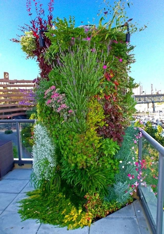 jardin-vegetal-01