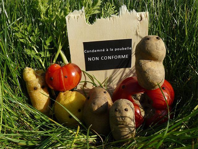 légumes on calibrés, légumes jetés