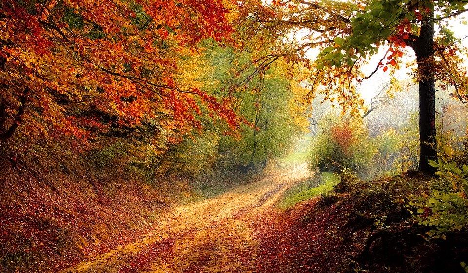 paysage d'automne forêt